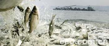长江故道 四大家鱼的最后栖息地