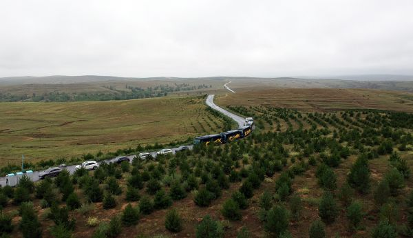 2008-2012年一期植树成果