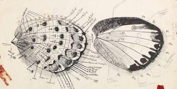 納博科夫,那個昆蟲專家去教文學課了