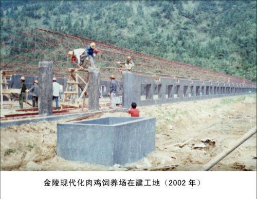 金陵现代化肉鸡饲养场在建工地(2002年)