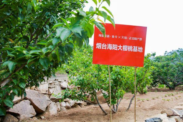 淘宝天猫整合高品质水果产地资源,创新直供模式